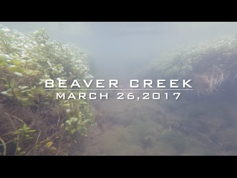 Trout Fishing: Beaver Creek