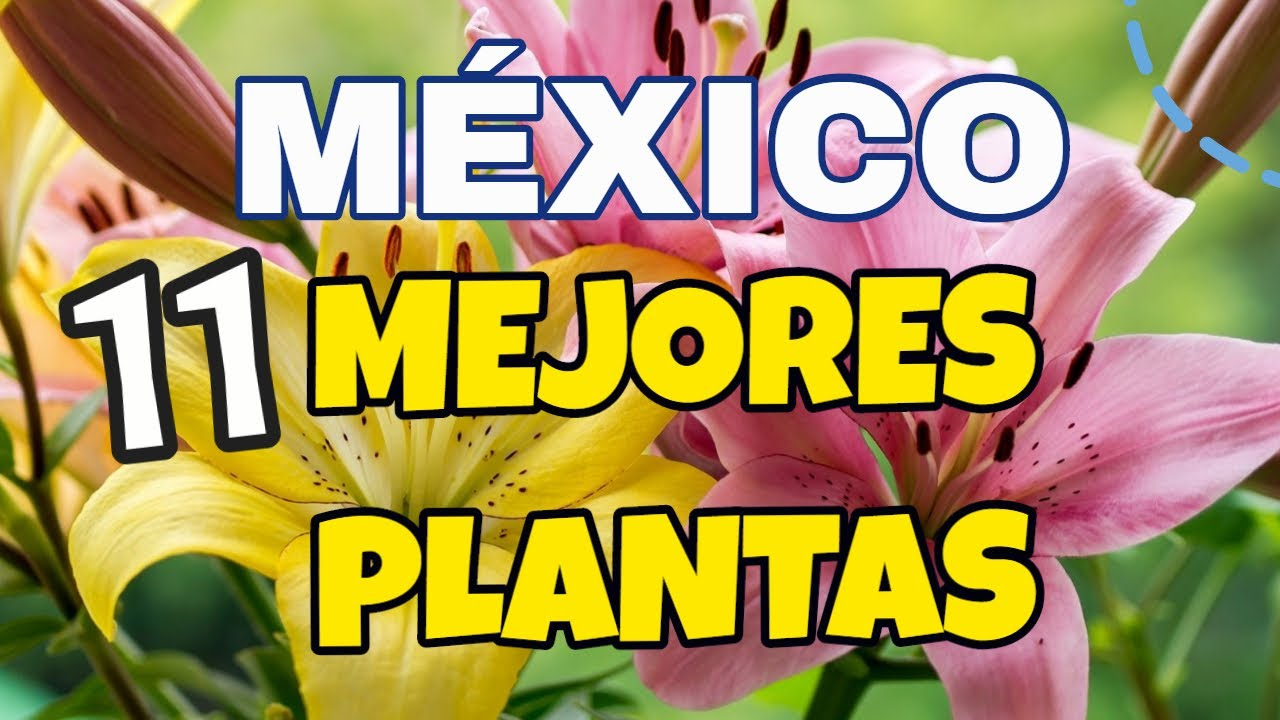 🌹 Top PLANTAS EN MÉXICO ➡ PLANTAS NATIVAS DE MÉXICO Video POPULAR ❀✿⚘
