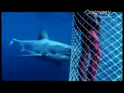 do sharks have a color preference youtube