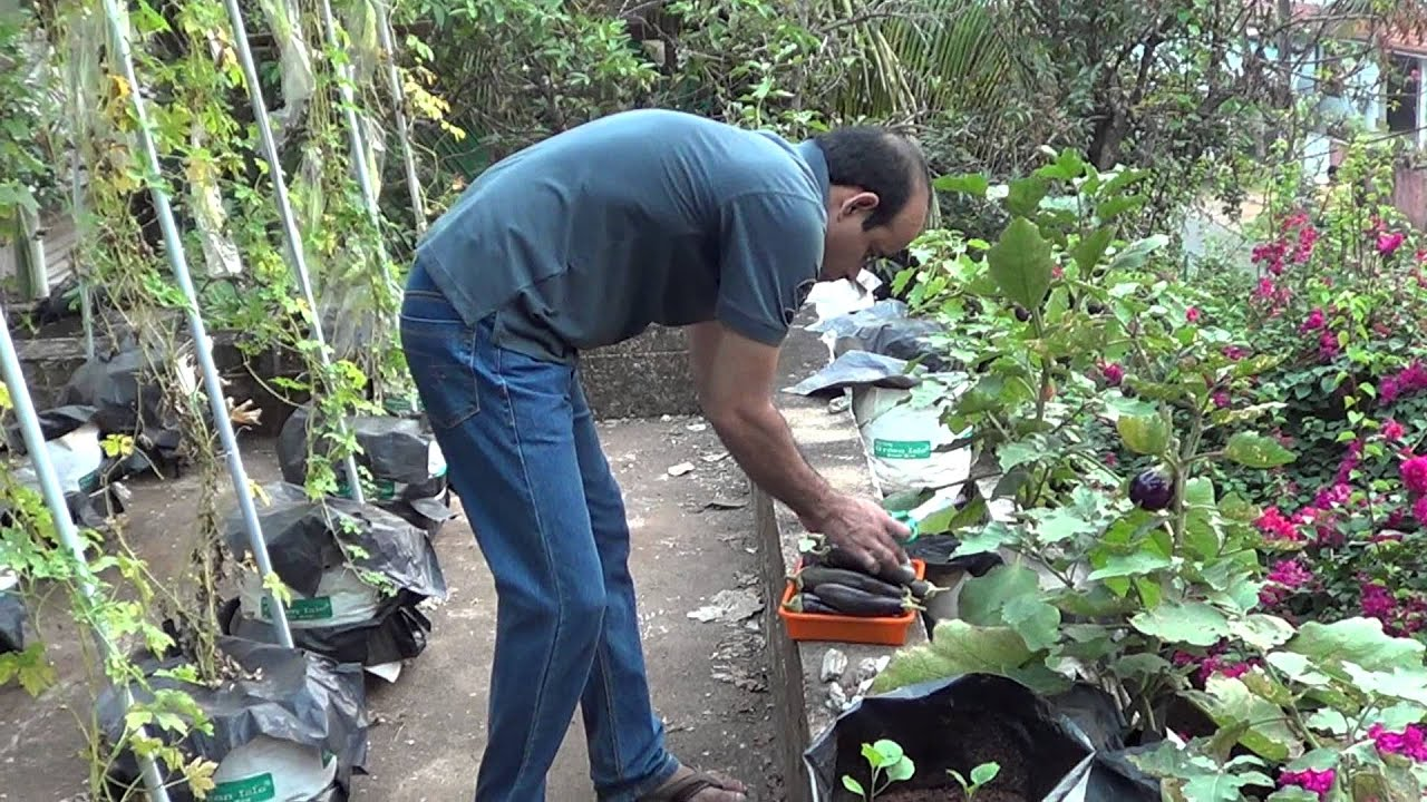 Terrace Kitchen Garden Kerala Terrace Garden Pt 1 Youtube