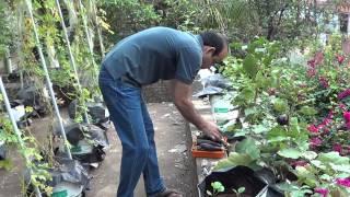 kerala terrace garden PT 1