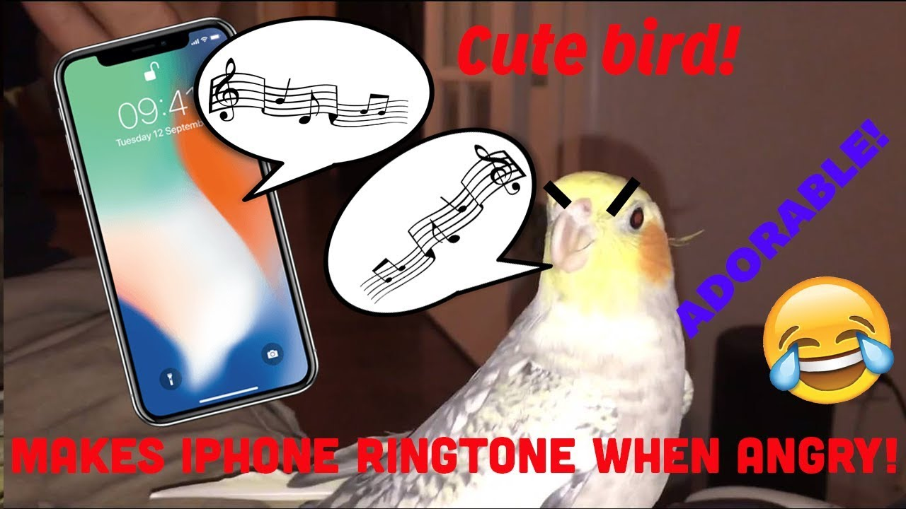 Parrot Humming iPhone Ringtone