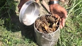 Catching crabs with bare hands - Freshest crab curry - Great Indian Street Food - My Village My Food