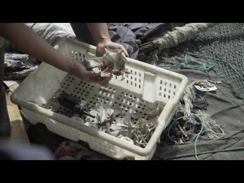 Hope in West Africa Tour - Greenpeace exposes illegal fishing