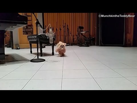 Capitol Records gets a visit from Munchkin the Teddy Bear