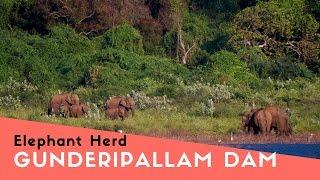 Elephants in Gunderipallam Dam Gobichettipalayam, Sathyamangalam Tiger Reserve