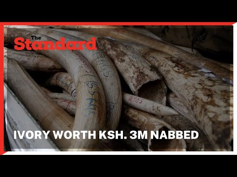Three suspects nabbed with Ivory worth Ksh. 3 million in Maralal town, Samburu County