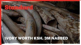 Three suspects nabbed with Ivory worth Ksh. 3 million in Maralal town, Samburu County