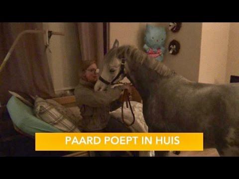 PAARD POEPT IN HUIS    PaardenpraatTV