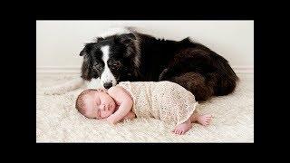 Собаки няни - сборник милых собачек. NEW