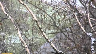 Новости погоды - снег в Москве - 21 апреля 2015