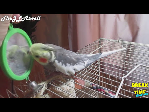 90 Seconds of Funny Parrots talking to the Mirror - Cute Parrot Birds React to Mirror Compilation