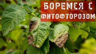 ФАЗЕНДА-2013.06.16 - Фрагмент 34