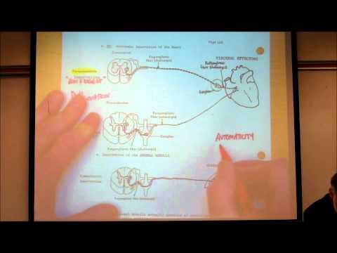 AUTONOMIC NERVOUS SYSTEM; PART 1 by Professor Fink.wmv