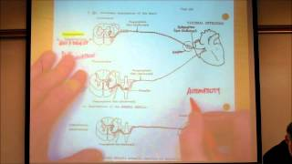 AUTONOMIC NERVOUS SYSTEM; PART 1 by Professor Fink.wmv