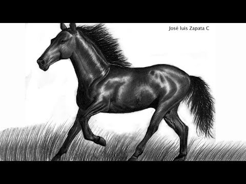 Dibujo de un caballo a lápiz  HD 60FPS  Drawing of a horse in pencil
