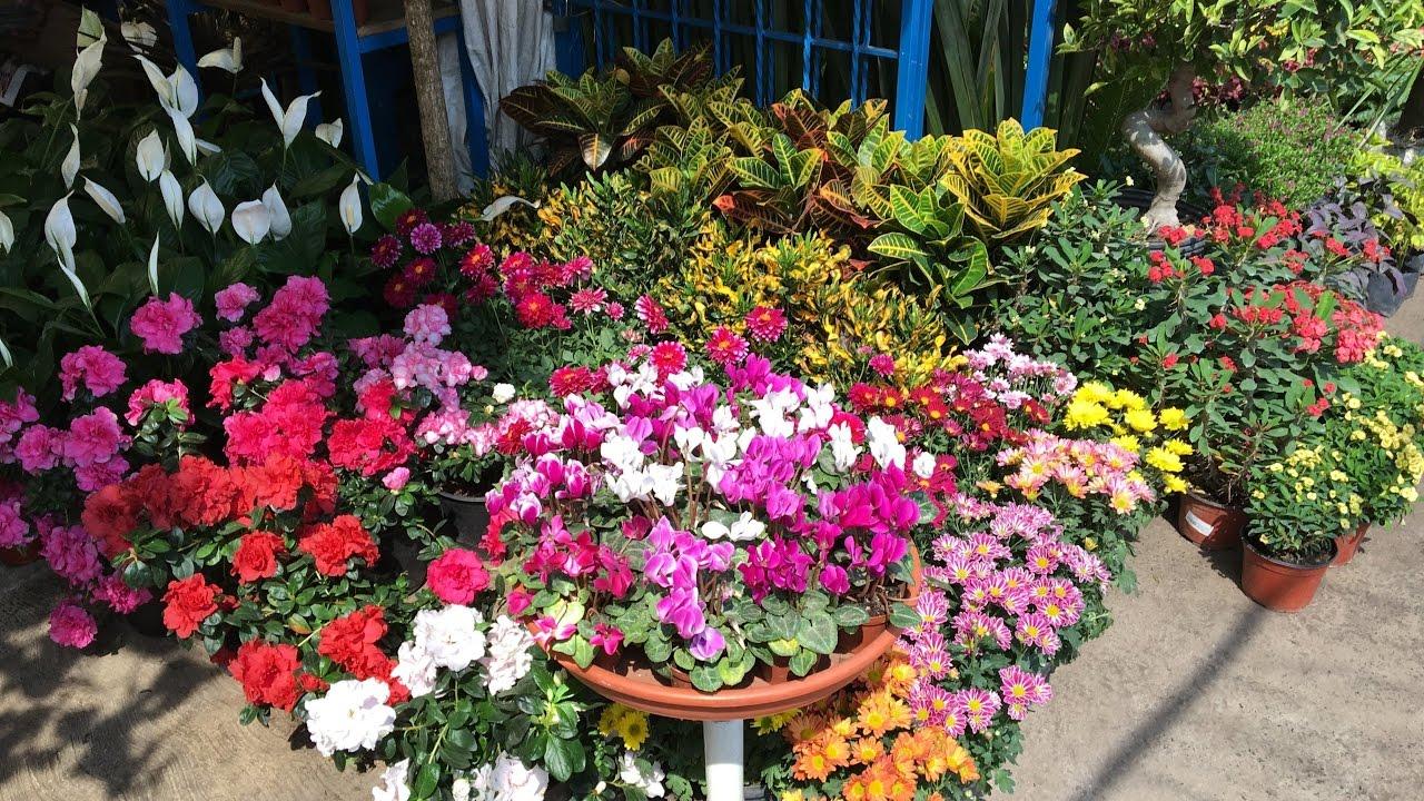 Mercado de flores y plantas de cuemanco cuemanco 39 s for Que es un vivero de plantas
