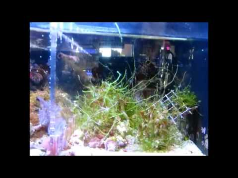 A cool Salt water pet store AQUITICA in Tinley Park Illinois