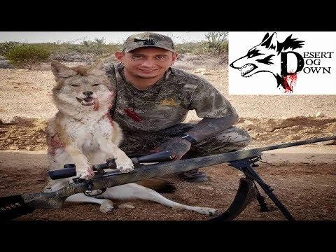 Arizona Predator Hunting ( DESERT DOG DOWN )