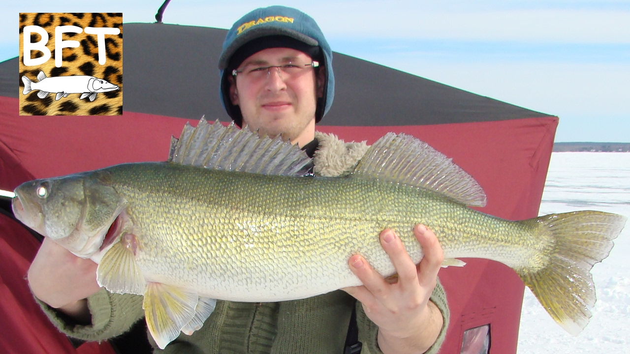 Ice fishing for big walleye 10 lbs lake winnipeg 2 for Lake winnipeg fishing report