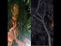 Penampakan Hantu Banyu Kalimantan