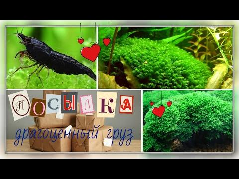 Клариас или драчливый сом в домашнем аквариуме