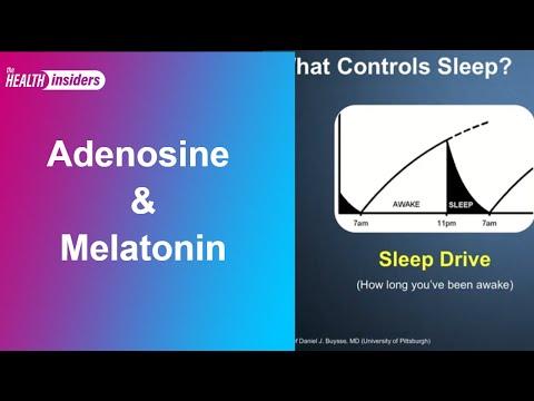 Sleeping: Adenosine and Melatonin