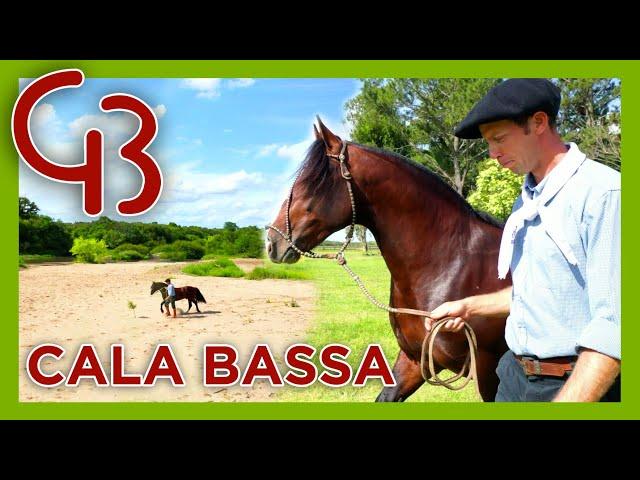 CALA BASSA-  Campeã Nacional da Copa dos Criadores