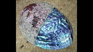 Muriatic Acid Versus Shells