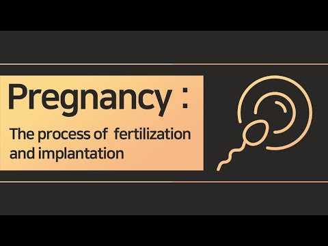 Pregnancy, The process of Ovulation, Fertilization and Implantation