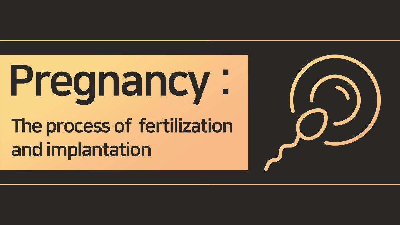 Download Pregnancy, The process of Ovulation, Fertilization and Implantation
