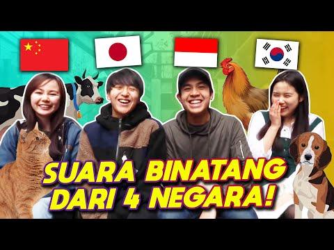 NGAKAK! PERBEDAAN SUARA BINATANG (INDONESIA VS JEPANG VS CHINA VS KOREA)!