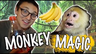 CAN I FOOL A MONKEY WITH MAGIC!?