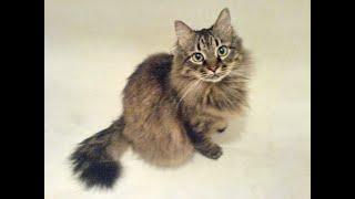 Умер кот Кузя. Прожил 17 лет
