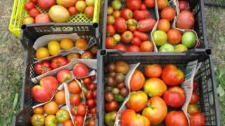 семена почтой по россии(Редкие семена помидор! Семена почтой http://фечшоп.рф., 2015-10-27T12:40:09.000Z)