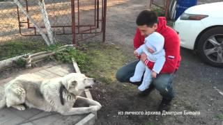 """""""Бокс в лицах"""" №10 Дмитрий Бивол."""