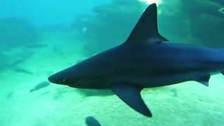 deep blue - Hai-Aquarium auf Mallorca