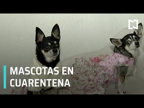 Medidas Coronavirus l ¿Cómo cuidar a tus mascotas durante cuarentena?