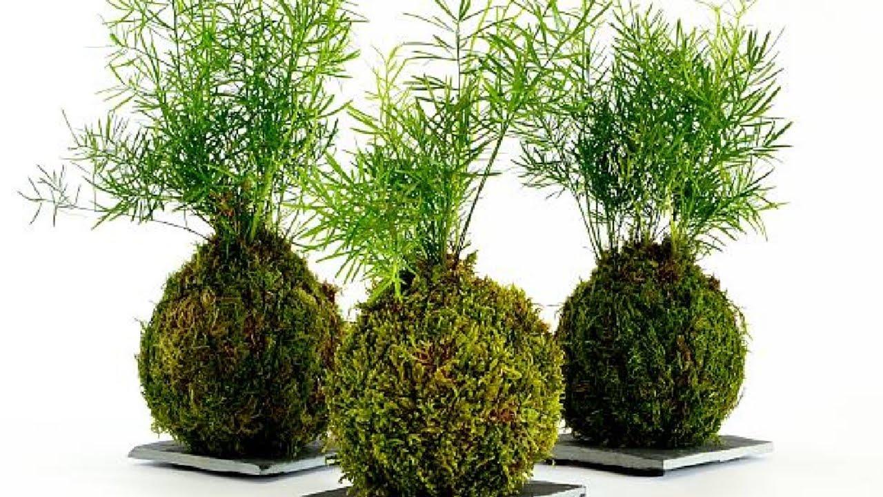 kokedama||सीखे gardening की एक नई कला,जो आपके गार्डन को और भी खूबसूरत बनाएं||how to make kokedama