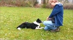 Hundetraining für flotte Pfoten - Welpen- und Junghundetraining