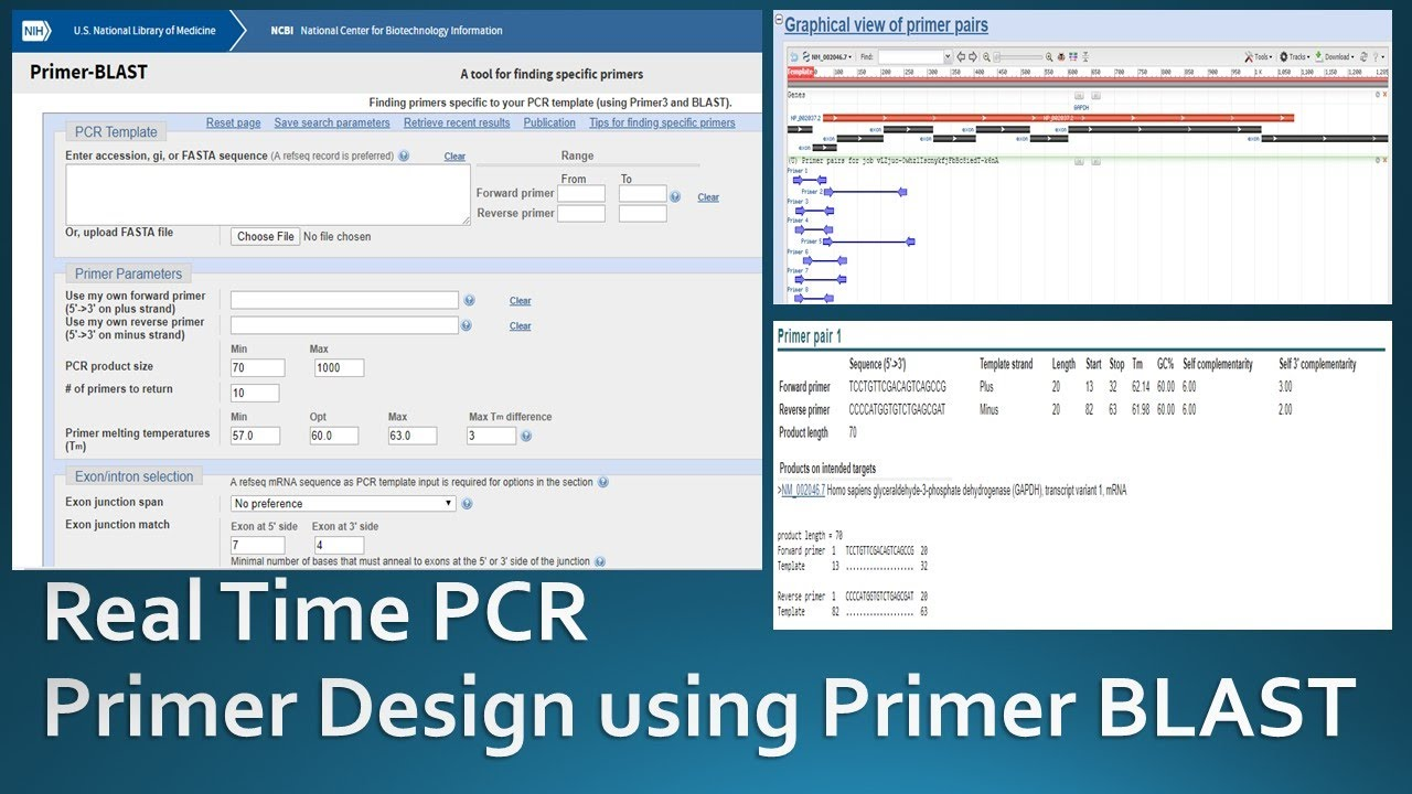 Primer Designing For Real Time Pcr Using Ncbi Primer Blast Youtube