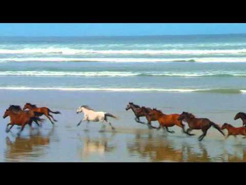 Mis peliculas  de caballos, aves e imagenes de animales.