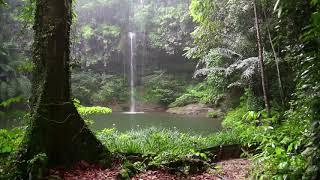 Видео обои - Озерцо в лесу