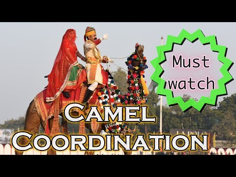 CAMEL CEREMONIAL DRILL | AMAZING DISPLAY OF COORDINATION