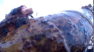 Зимняя подводная охота на налима  Енисей  Кабаний остров 12 01 2014 с озвучкой(Лучшие, прикольные, иногда опасные истории об охотниках, рыбаках и их помощниках. Конечно, не забыли и про..., 2015-09-16T05:47:36.000Z)