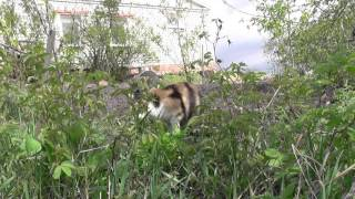 Кошка ест траву. Почему она это делает?