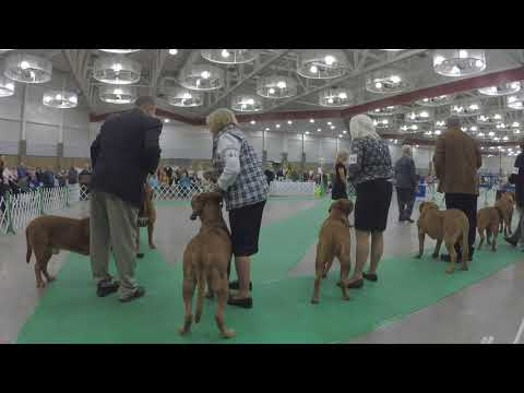 2017 Dogue De Bordeaux National Specialty Best of Breed - Final