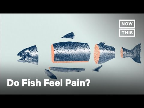 What Fish Feel When They Are Killed For Food | NowThis