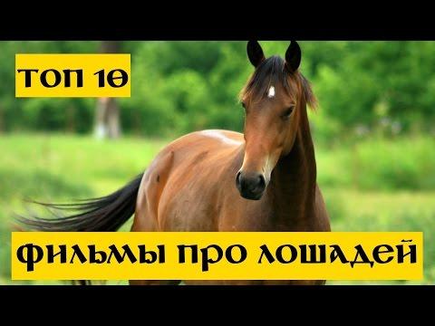 10 Лучших фильмов про лошадей