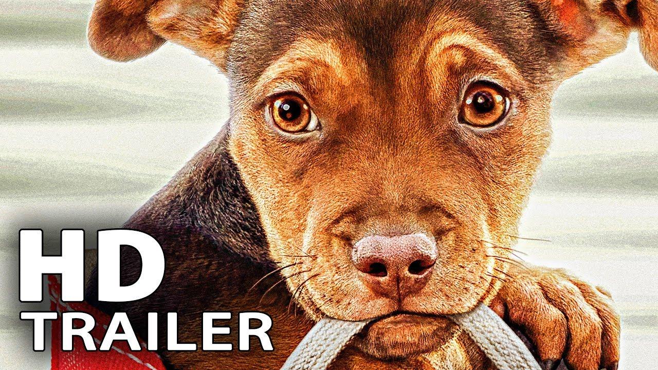 hundefilm 2019